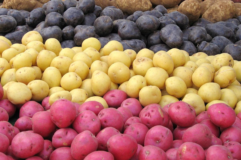 que tipos de batatas existem