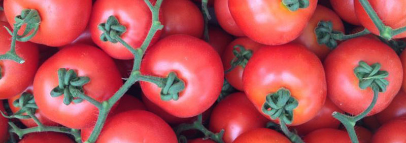 tomate holandês